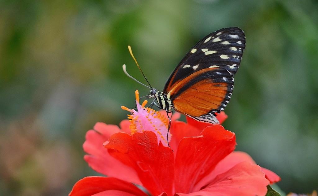 butterfly-611181_1280